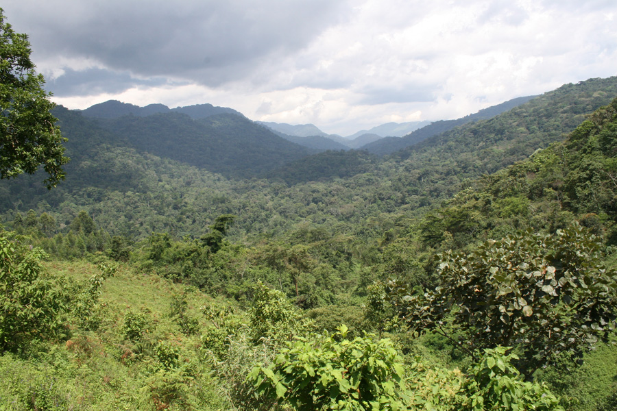 Bwindi Impenetrable National Park - Site Location Bwindi Impenetrable National Park - Site Location