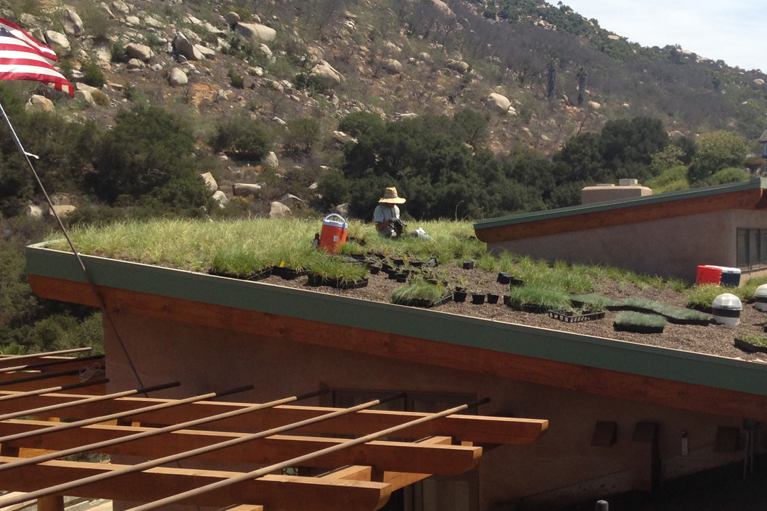 Plants being installed on green roof.