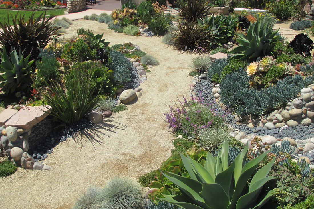 Drought-tolerant landscape replacing a lawn.